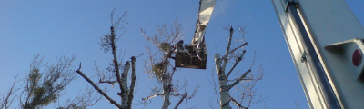 PRUNING WITH THE USE OF A LIFT AND A CRANE